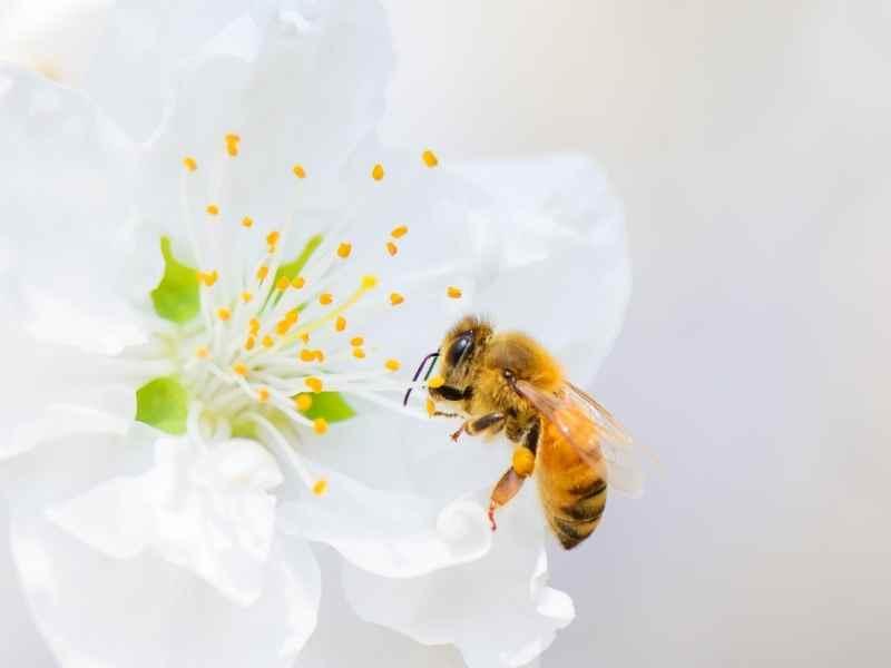 bee breath breathing exercises